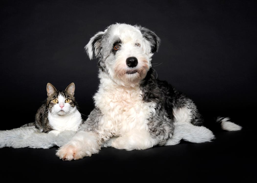 Hund Und Katzen Portrait