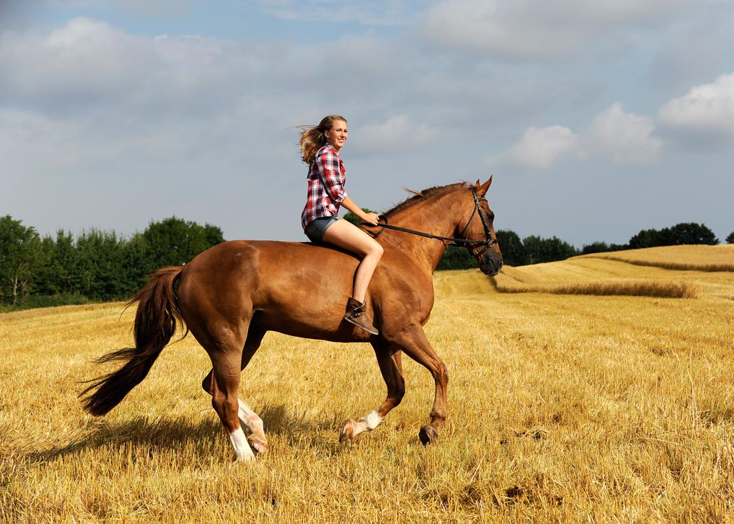 Pferdeshooting, Pferdeportrait, Outdoor